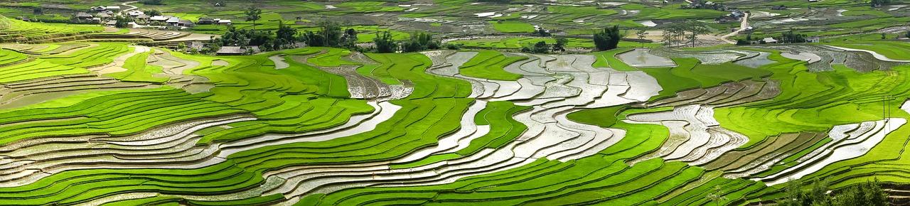 ベトナム田園地帯